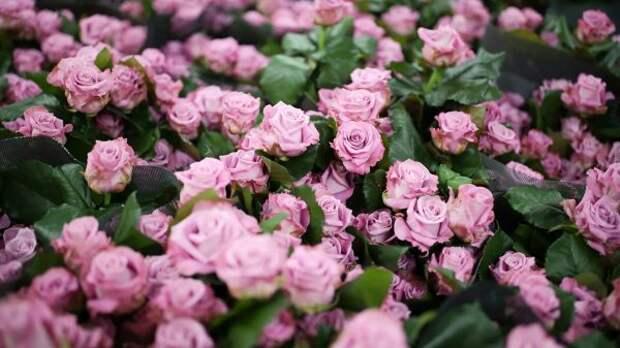 ВРоссии уничтожат более тысячи зараженных цветов изЛитвы