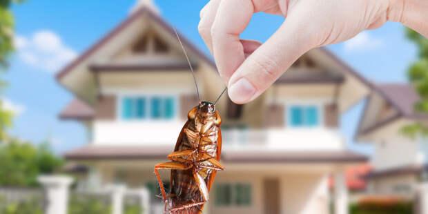 Ученые нашли способ помешать тараканам размножаться