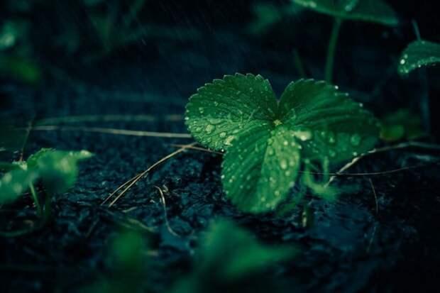 Лучшие растения-компаньоны для клубники