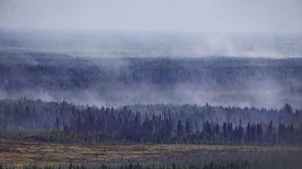 Площадь ландшафтных пожаров в Карелии увеличилась до 11 тыс. га