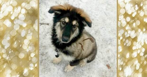 Маламут — порода свободных собак! :) Сбежавшая красотка принесла «в подоле» замечательное ЧУДО!