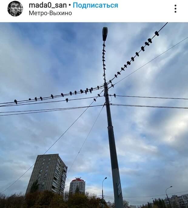 Фото дня: голубиная гирлянда у метро «Выхино»