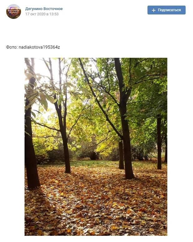 Фото дня:  В «Северных Дубках» расстелили ковер из листьев