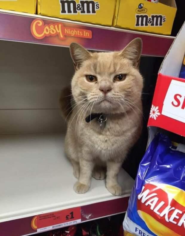 Сколько бы ни пытались этого кота выставить за дверь, он снова оказывается в магазине  кот, магазин, прикол, юмор