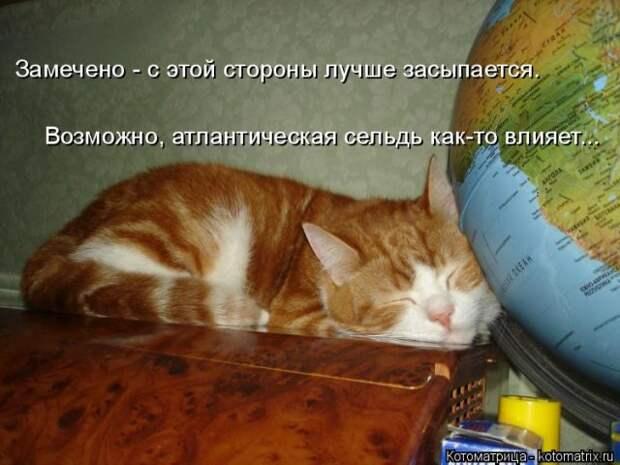 Свежая котоматрица для настроения (17 фото)