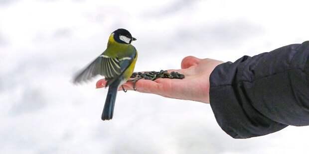 Для птиц в Лианозовском лесу разместят новые кормушки