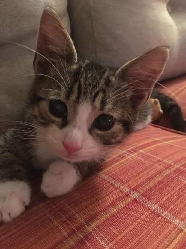 Умирающий котенок вслепую полз навстречу девушке. Врач предложил усыпить кроху, но спасительница отказалась