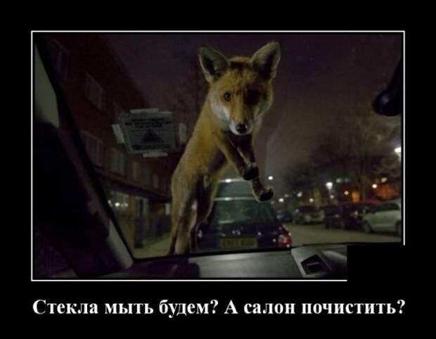 Демотиватор про мойщика авто