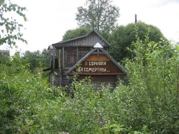 Сорняки бессмертны! Фото с сайта fishki.net