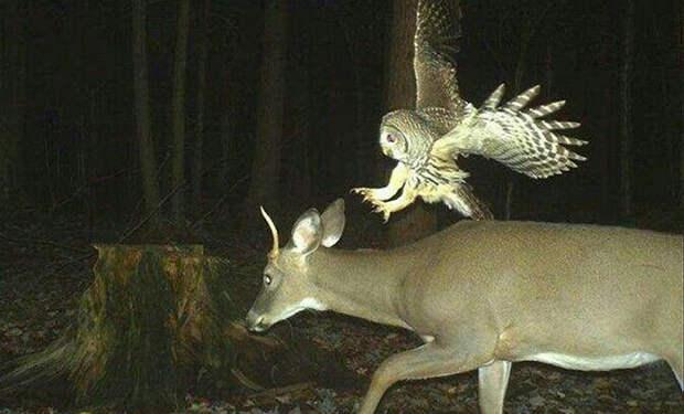5 фото со странным поведением животных, которые сделала фотоловушка в ночном лесу