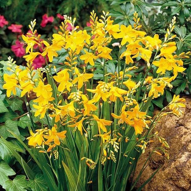 Засухоустойчивые растения для сада: выбираем самые красивые сорта