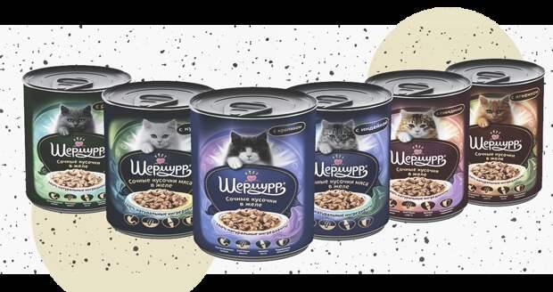 5 советов, как правильно кормить кота