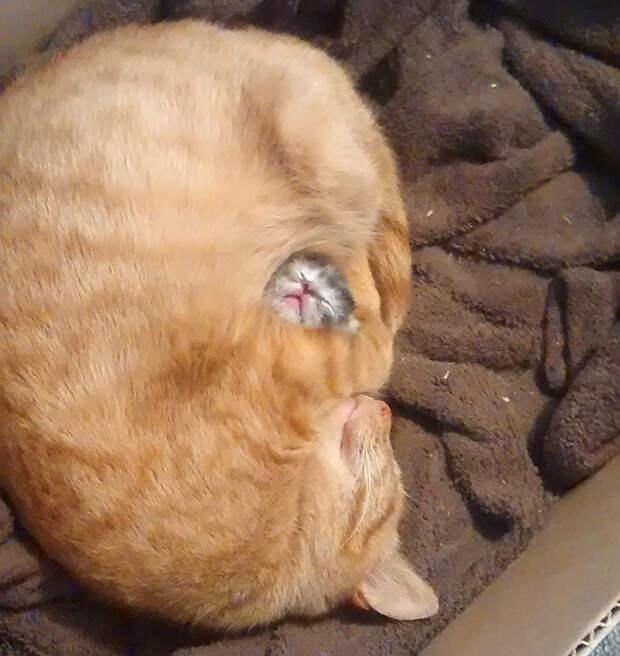 3. Мать и дитя котенок, сон