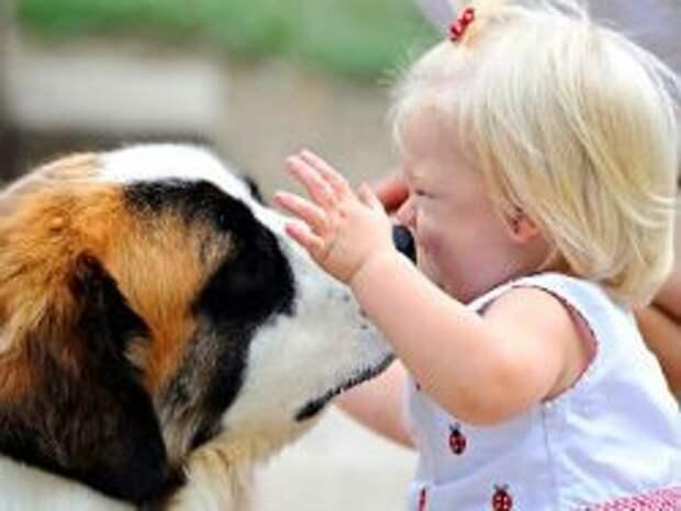 Новость на Newsland: Собаки снижают вероятность возникновения астмы у детей