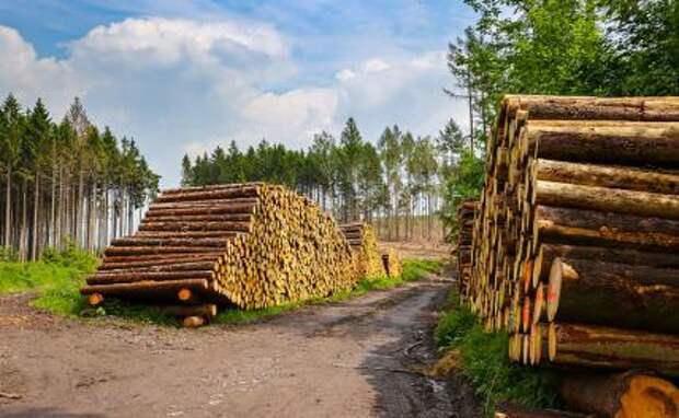 Абрамович захотел приватизировать русский лес