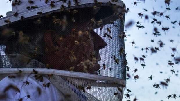 Замечено массовое исчезновение всех насекомых мира