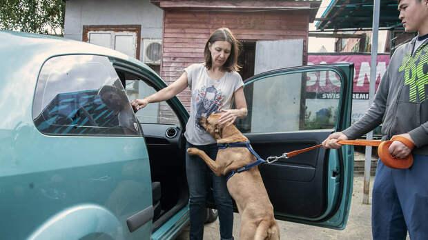 Когда собаку забирают домой, кинолог помогает наладить с ней контакт