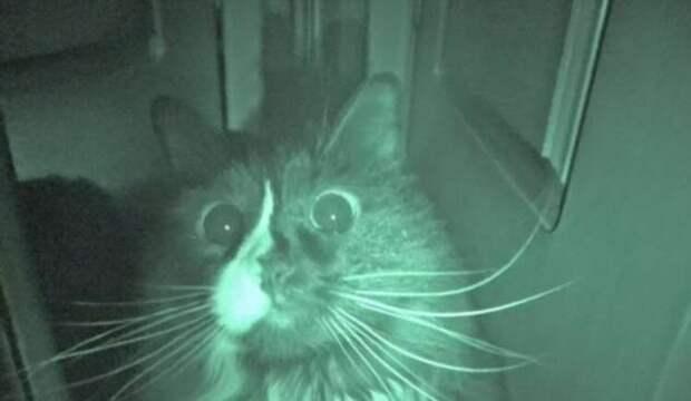 Почему кошки бегают по ночам? (3 фото + видео)