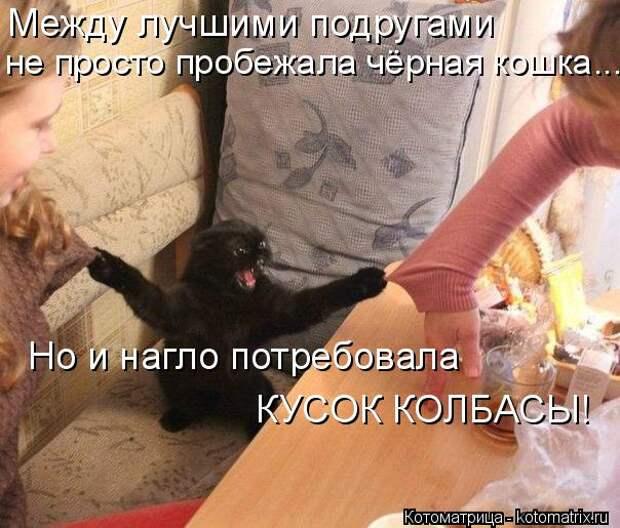 Котоматрица: Между лучшими подругами не просто пробежала чёрная кошка.... Но и нагло потребовала  КУСОК КОЛБАСЫ!