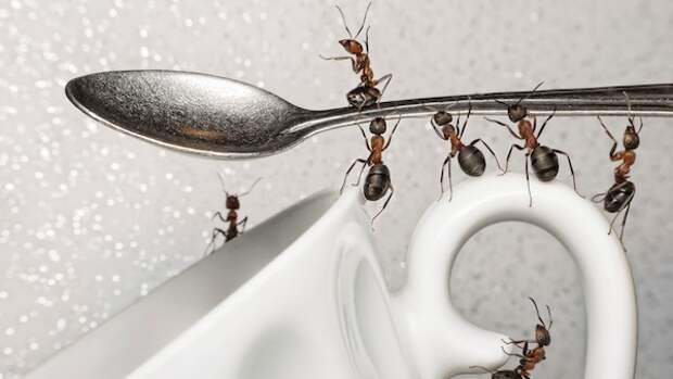Сахар и сода против муравьев: эффективно и безопасно!