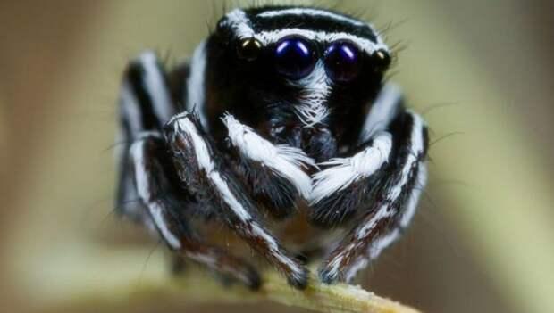 В Австралии открыты новые виды красочных пауков