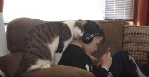 Ласковый котик показывает хозяину, что любит его. Очаровательное видео!
