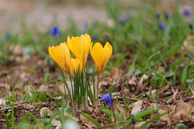 Последний день апреля в Удмуртии пройдет без осадков
