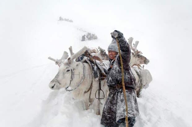 Как живет вымирающее племя оленеводов изМонголии