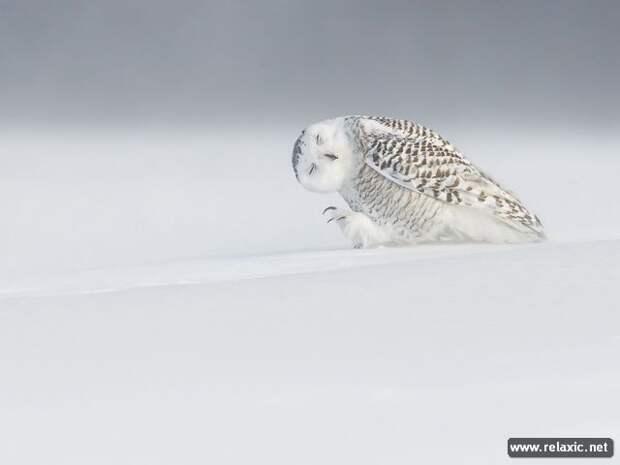 Лучшие фото февраля и марта-2015 от канала National Geographic (69 фото)