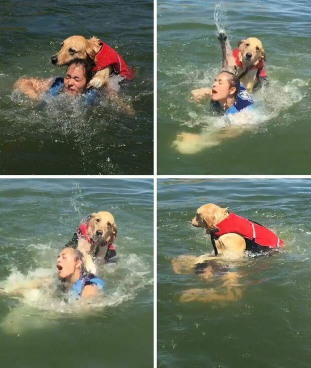 """31. """"Это был чудесный день на озере, пока моя собака чуть не утопила мою сестру"""" баловство, животные, питомец, поведение, собака, странность, юмор"""