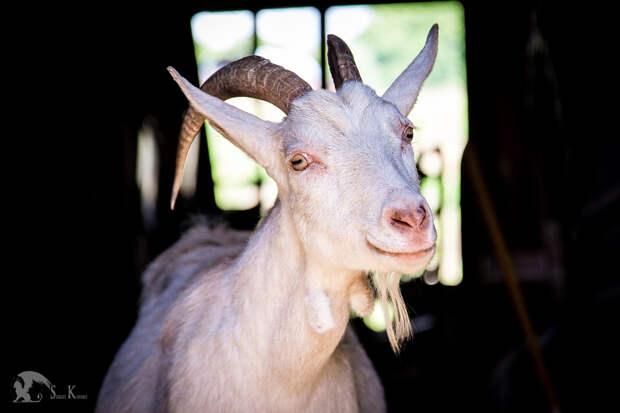 37 фотографий животных, которые вызывают улыбку - 14