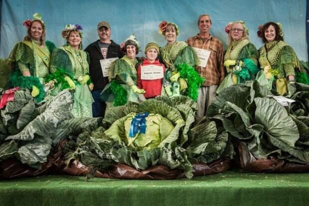 Почему на Аляске растут овощи-гиганты? (8 фото)