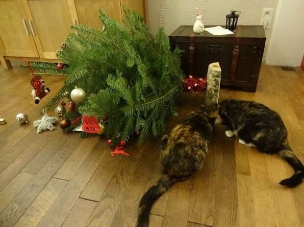 """22. """"Ой! Елочка, ты в порядке?"""" животные, новый год, праздник к нам приходит, разрушительная сила, рождество, собаки и кошки, юмор"""