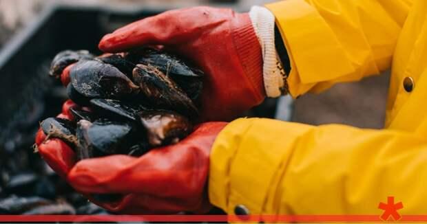 Росрыболовство может ограничить вылов мидий в Черном море, но разрешит ловить рапанов