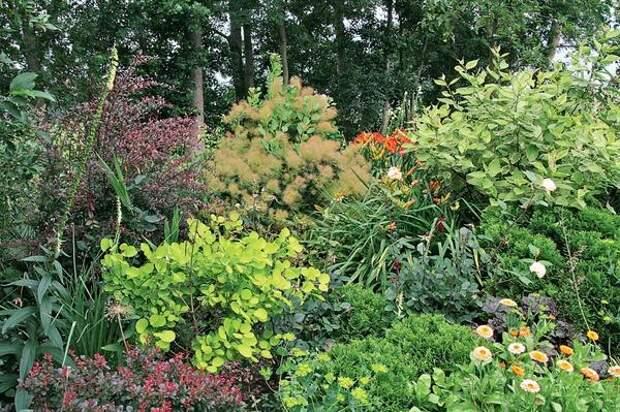 Ленивый сад и глаз радует, и особого ухода не требует