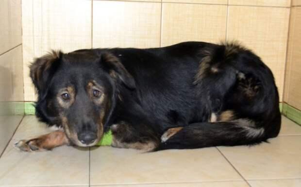 Застенчивый пёс прибился к стае бродячих собак, чтобы выжить животные, история спасения, помощь животным, приют, ржевка, собака