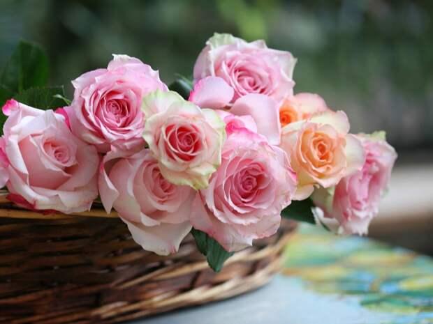 http://www.anypics.ru/pic/201303/1024x768/anypics.ru-61157.jpg