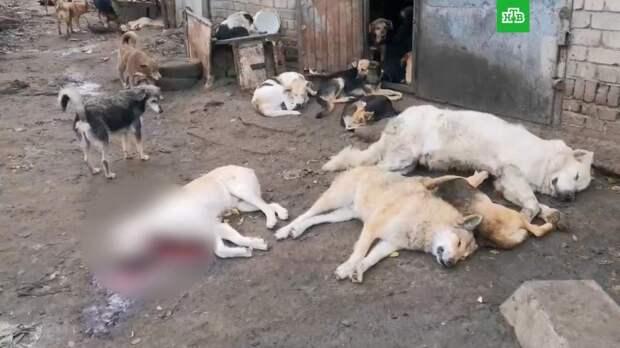 Неизвестные устроили бойню в приюте для животных в Воронеже