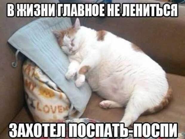 Прикольные коты - фото с надписями | Смешно, Юмор про кошек ...