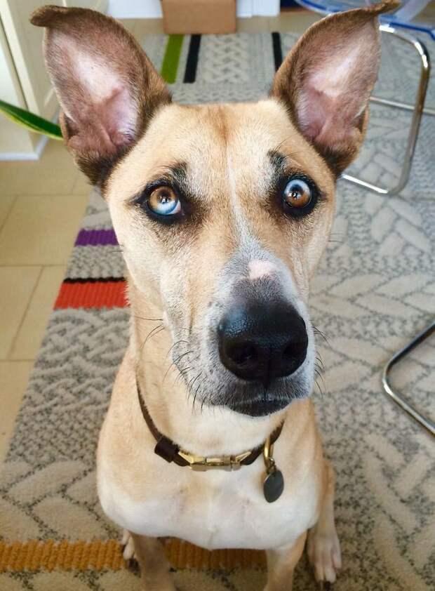 25 необычайно красивых животных с разноцветными глазами - Ga…