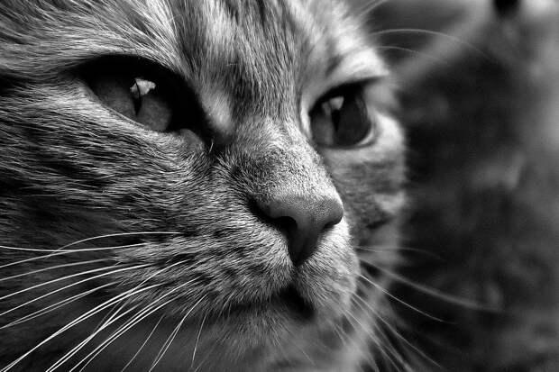 В Турции кот отбился от стаи бродячих собак и попал на видео