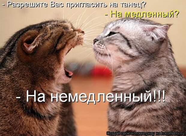 ЮМОР В КАРТИНКАХ.
