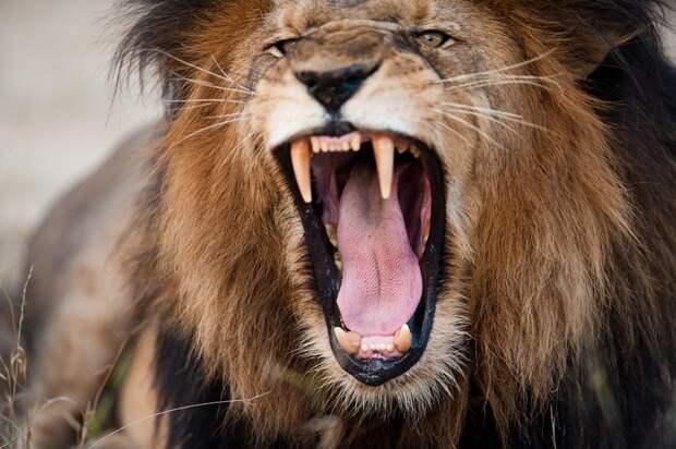 17 животных, которые нас убивают