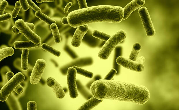 Почему ученые боятся супермикробов