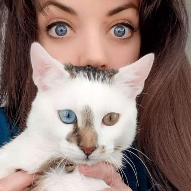 Великолепный кот Боуи с разноцветными глазами