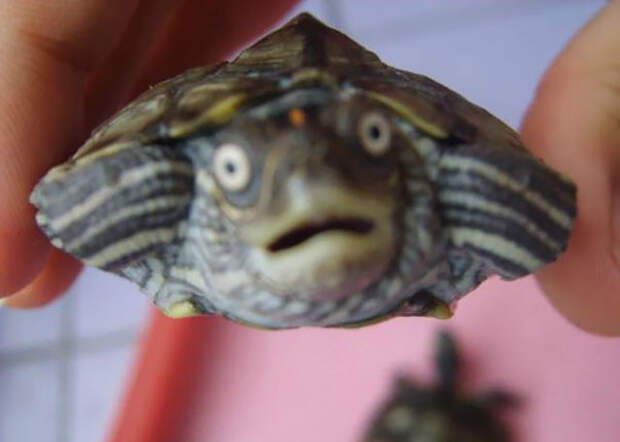 17. Милый малыш ниндзя, питомцы, черепахи