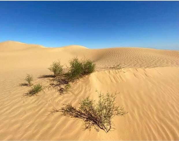 Африка по-русски. Посетила Астраханскую пустыню.