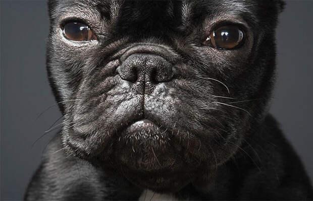 Животные на снимках Тима Флача