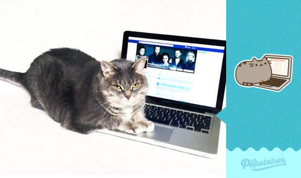 Фейсбук-стикеры оживают и мяукают. Проект высочайшего уровня кототы