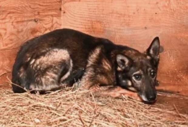В московском приюте нашли собаку, забытую всеми 6 лет назад
